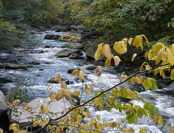 Water Aquatic Mountain Stream Fall Color Boulders