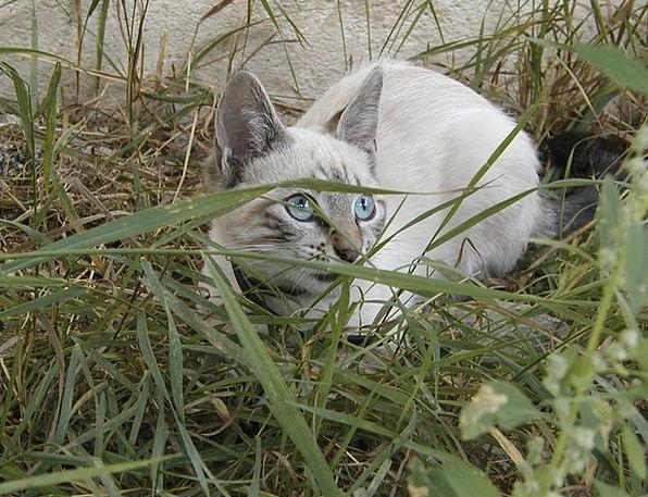 Cat Feline Catlike Gatta Bunny Rabbit Plush White