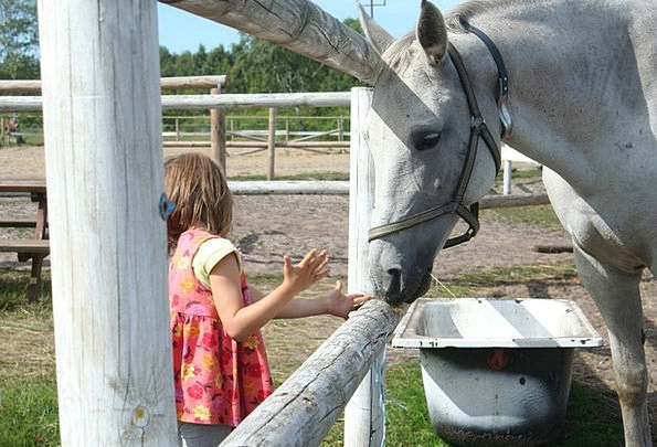 The Horse Youngster Feed Food Child