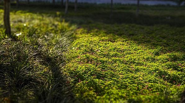Grassland Prairie P.m. Green Belt Afternoon Little