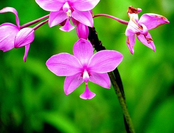 Orchid Landscapes Floret Nature Nature Countryside