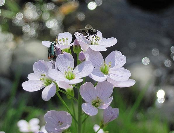 Flowers Plants Floret Insect Bug Flower Close Beet