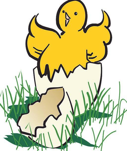 Baby Darling Fowl Hatching Shading Bird Broken Egg