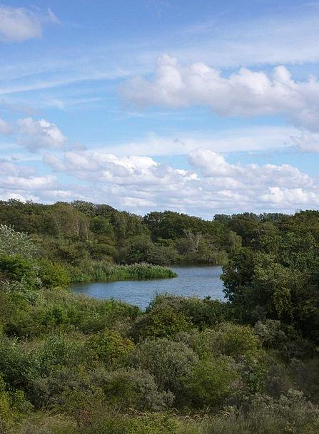 Meijendel Landscapes Nature Scheveningen Wassenaar