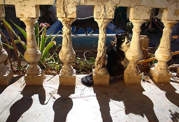 Shadow Gumshoe Pillars Old Ancient Columns Cat Fel