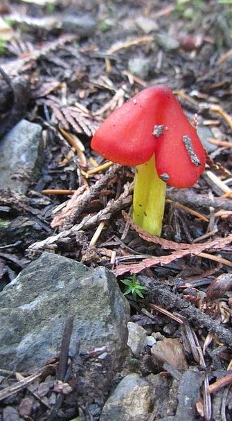 Mushroom Burgeon Landscapes Woodland Nature Nature