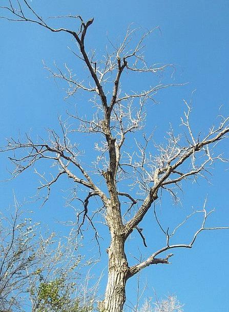 Tree Sapling Landscapes Division Nature Plant Vege