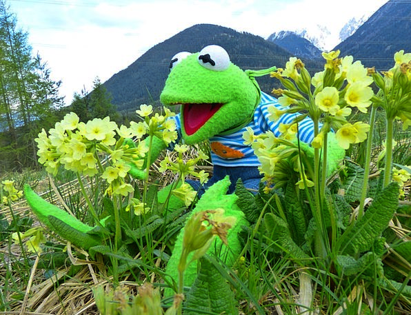 Kermit Landscapes Nature Marvel Genius Frog Cowsli