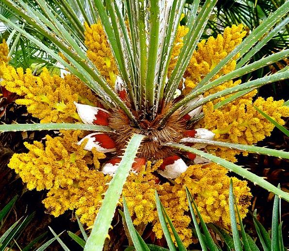 Flower Floret Vacation Tribute Travel Palm Trees P