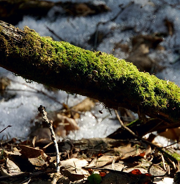 Moss Moss-covered Old Branch Mossy Moss-Covered Br