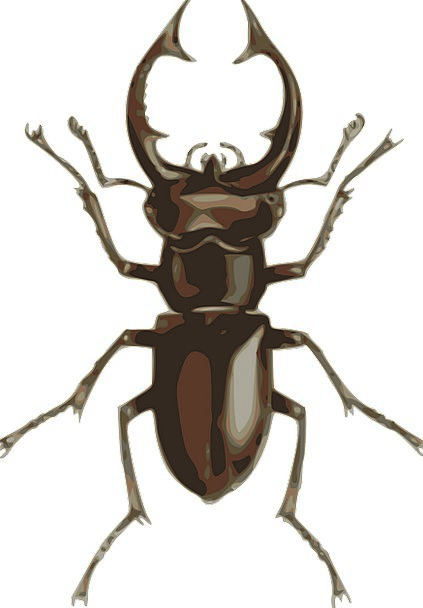 Dorbeetle Beetle Insect Small Minor Zoology Crawl