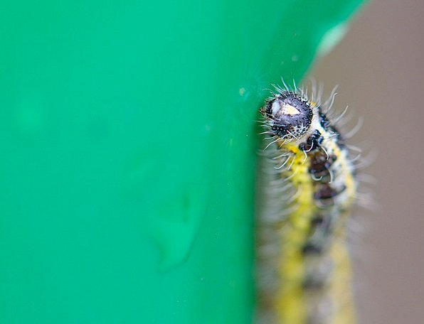 Caterpillar Worm Landscapes Periodical Nature Natu