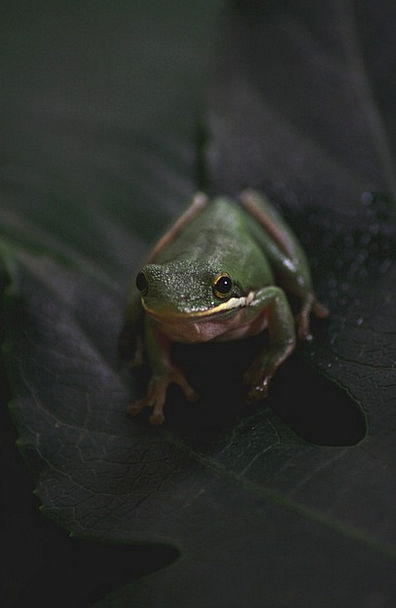 Frog Physical Pet Domesticated Animal Toad Pond Wa
