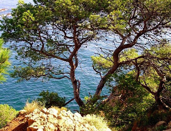 Pine Long Marine Water Aquatic Sea Blue Azure Side