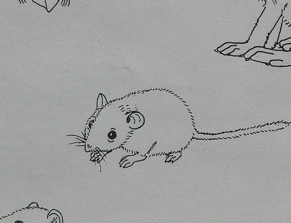 Mouse Physical Coloring Pages Animal Paint Dye Dra