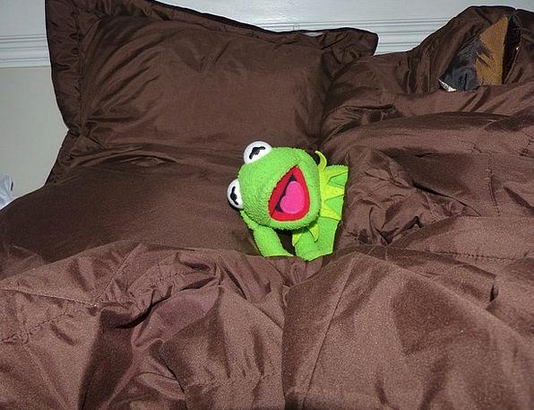 Sleep Slumber Weary Bed Divan Tired Kermit Frog