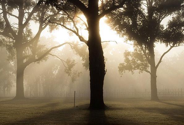 Tree Sapling Landscapes Scenery Nature Fog Mist La