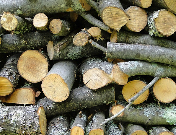 Wood Timber Logs Woods Cord Wood Fuel Firewood Kin