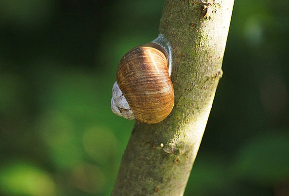Snail Landscapes Faunae Nature Nature Countryside
