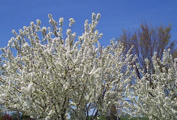 Spring Coil Landscapes Plants Nature Nature Countr