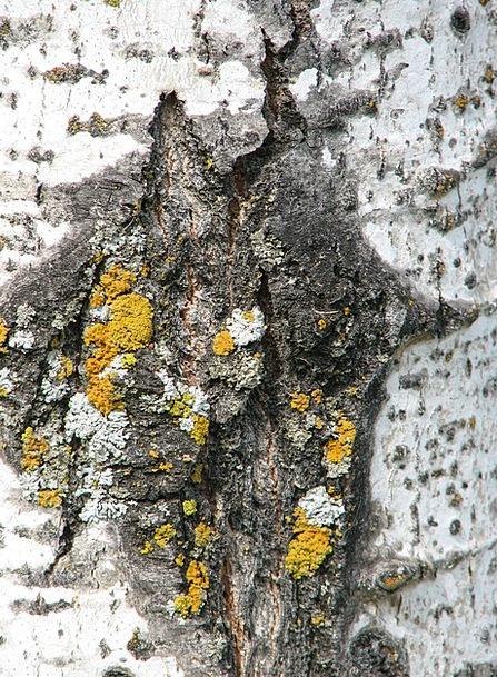 Tree Sapling Textures Bay Backgrounds Moss Bark Te