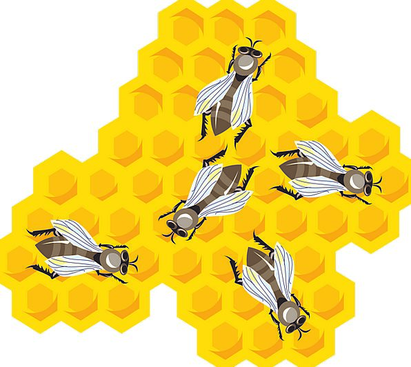 Bees Combs Searches Honeycomb Free Vector Graphics