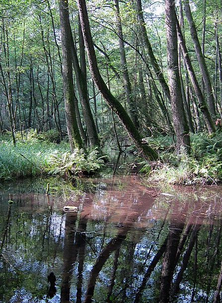 Müritz Landscapes Understand Nature Nature Country