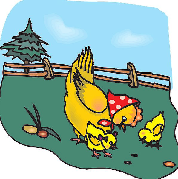 Chicks Ma Chicken Cowardly Mother Animals Chickens
