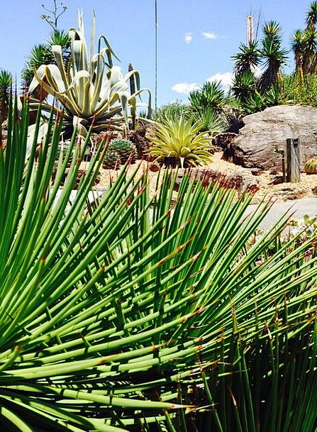 Garden Plot Landscapes Vegetable Nature Cactus Pla