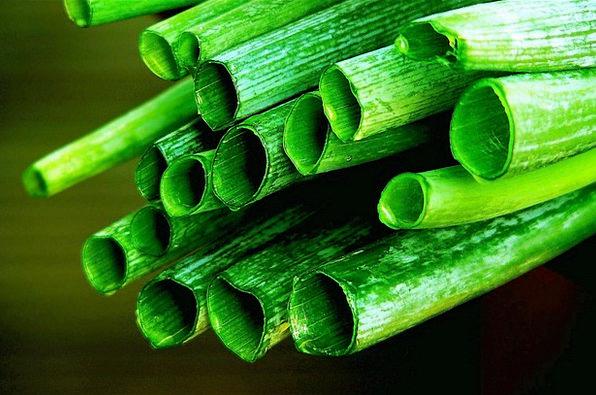 Leek Landscapes Nature Onions Leek Greenhouse Rods