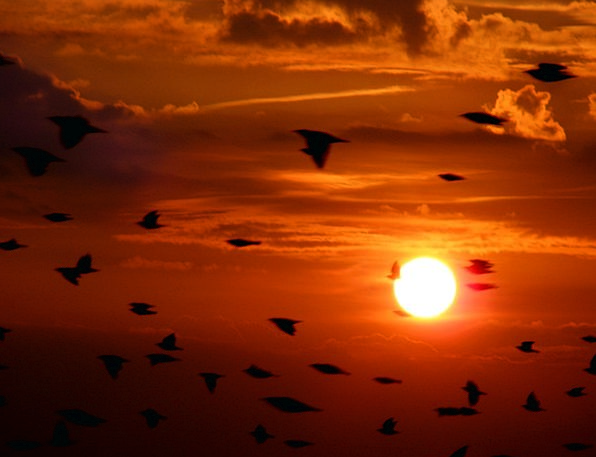 Flock Birds Vacation Natures Travel Flying Hoverin
