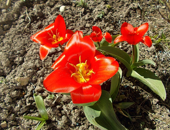 Flower Floret Landscapes Nature Floral Flowery Tul