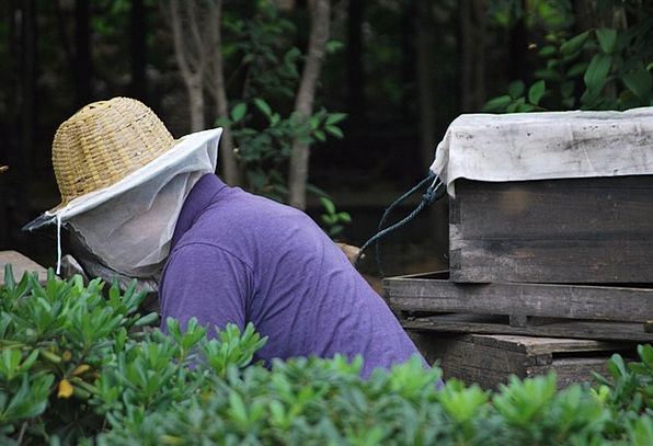 Beekeeper Craft Employee Industry Honey Darling Wo