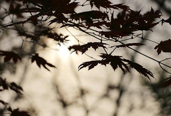 Autumn Fall Vacation Sundown Travel Wood Timber Su