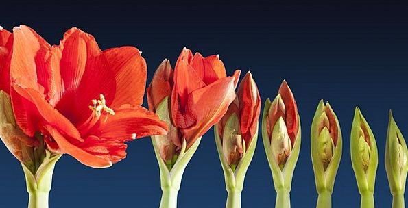 Grow Produce Landscapes Nature Time Lapse Blossom
