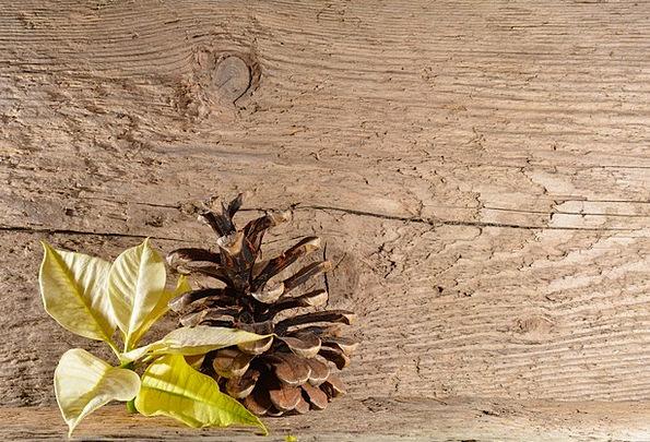 Wood Timber Textures Contextual Backgrounds Poinse