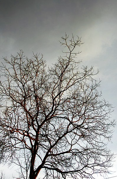 Bare Branches Sapling Branches Tree Twigs Bleak Ba