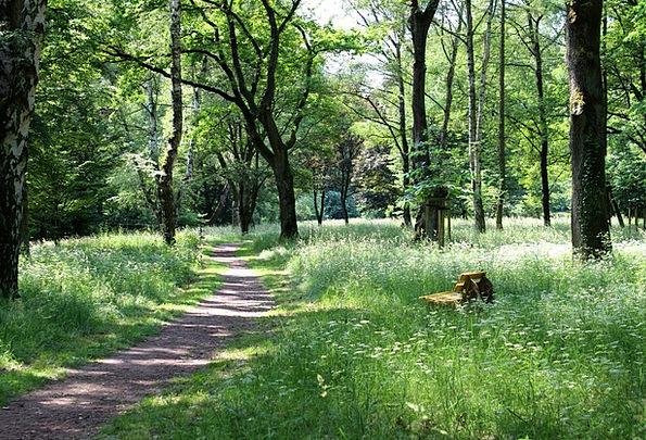 Forest Path Landscapes Set Nature Rest Break Bank
