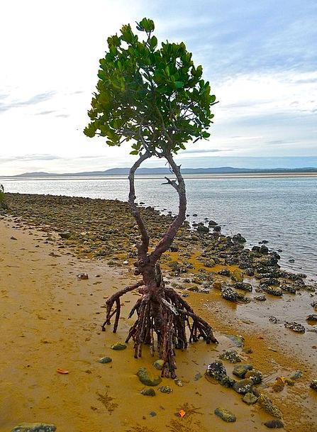 Isolation Separation Landscapes Nature Tree Saplin