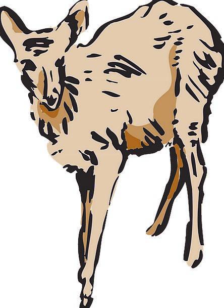 Deer Physical Mammal Creature Animal Free Vector G