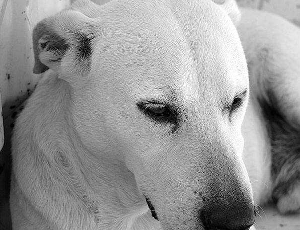 Dog Canine Dog Look Dog Head Mammal Pet Domesticat