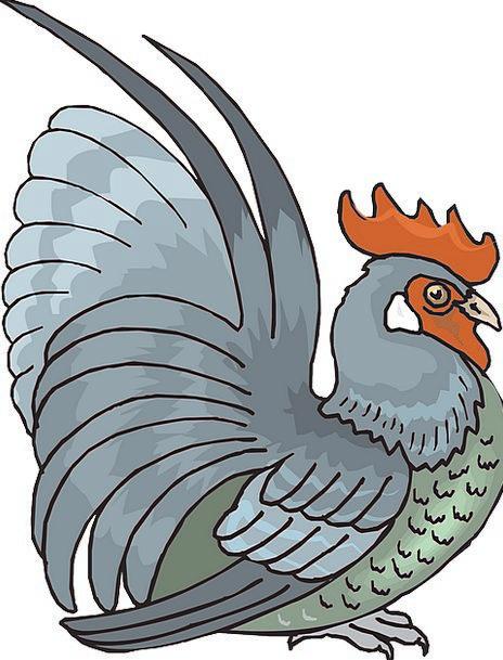Rooster Fowl Cock Raise Cockerel Free Vector Graph
