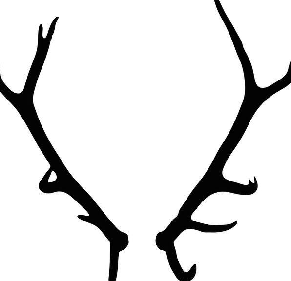 Antler Horn Horns Sirens Elk Stag Wildlife Mammal