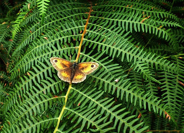 Fern Leaf Landscapes Nature Nature Countryside But