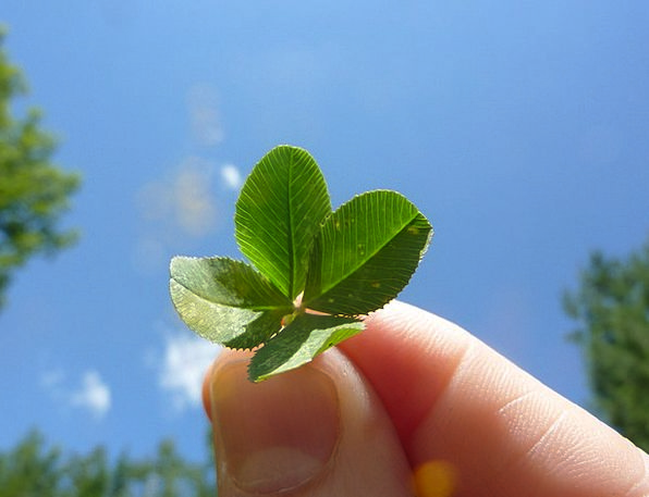 Four Leaf Clover Landscapes Nature Nature Countrys