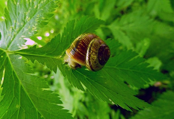 Snail Shell Landscapes Nature Plant Vegetable Snai