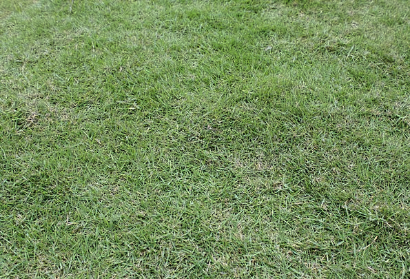 Green Grass Textures Lawn Backgrounds Green Lime G