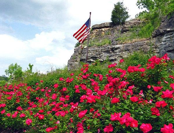 American Flag Flag Standard Flowers Botanical Patr