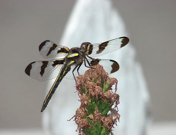 Dragonfly Annexes Insect Wings Nature Countryside