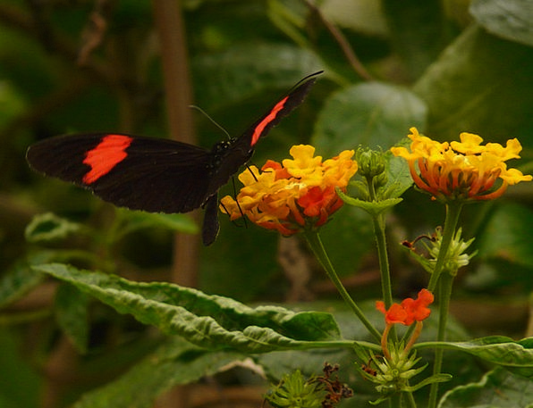 Butterfly Landscapes Nature Heliconius Erato Small